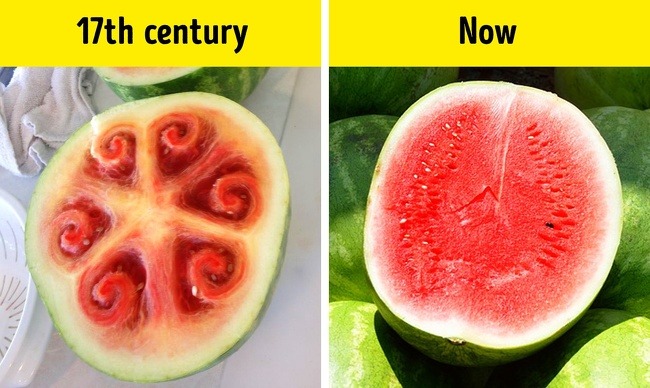 16 Most Interesting Facts Our World That Can Puzzle Anyone