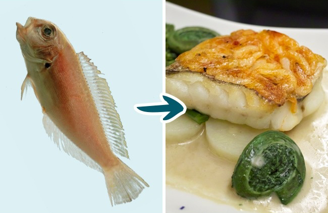 9 Kinds of Fish You Shouldn't Eat To Stay Healthy