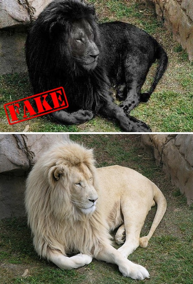10 Famous Fake Photographs Which Seem Absolutely Real