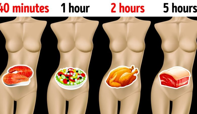 How Long Different Foods Take to Digest and Why It's Important