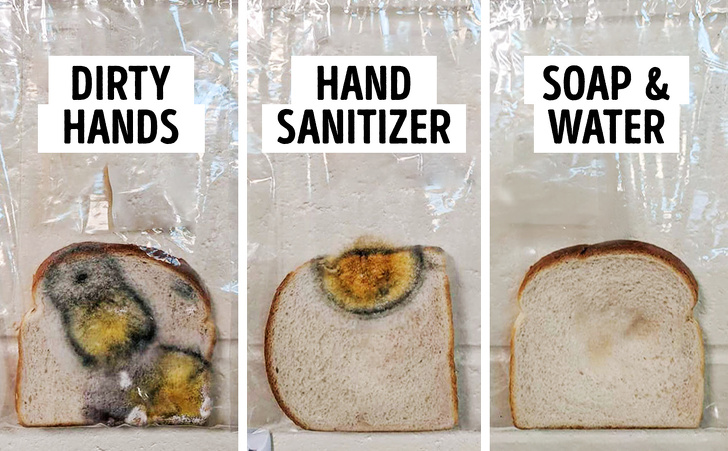 A Teacher Did an Experiment to Show the Power of Handwashing And The Results Are Shocking