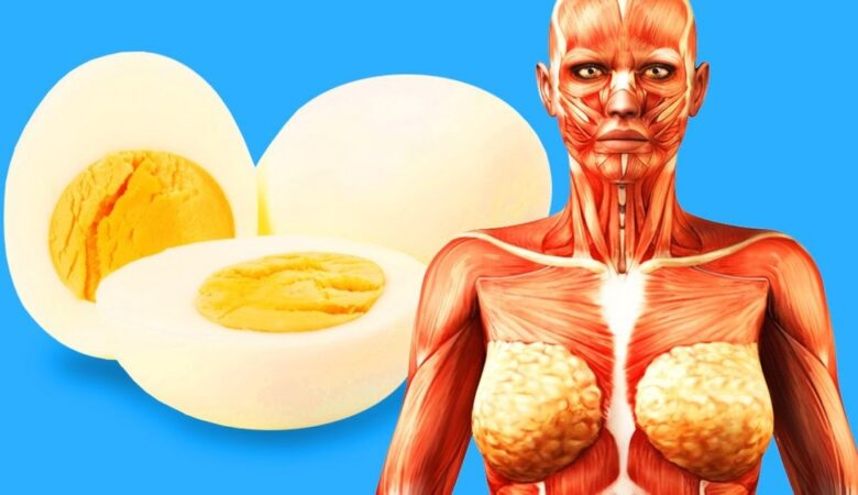 7 Things That Can Happen to Your Body If You Start Eating 2 Eggs a Day