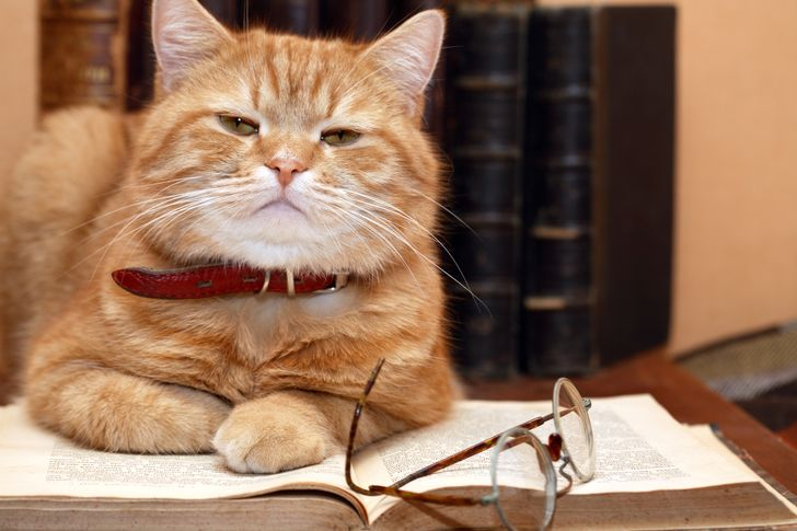 According to a New Study Cat Owners Tend to Be More Intelligent
